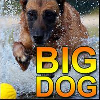 Система Big Dog